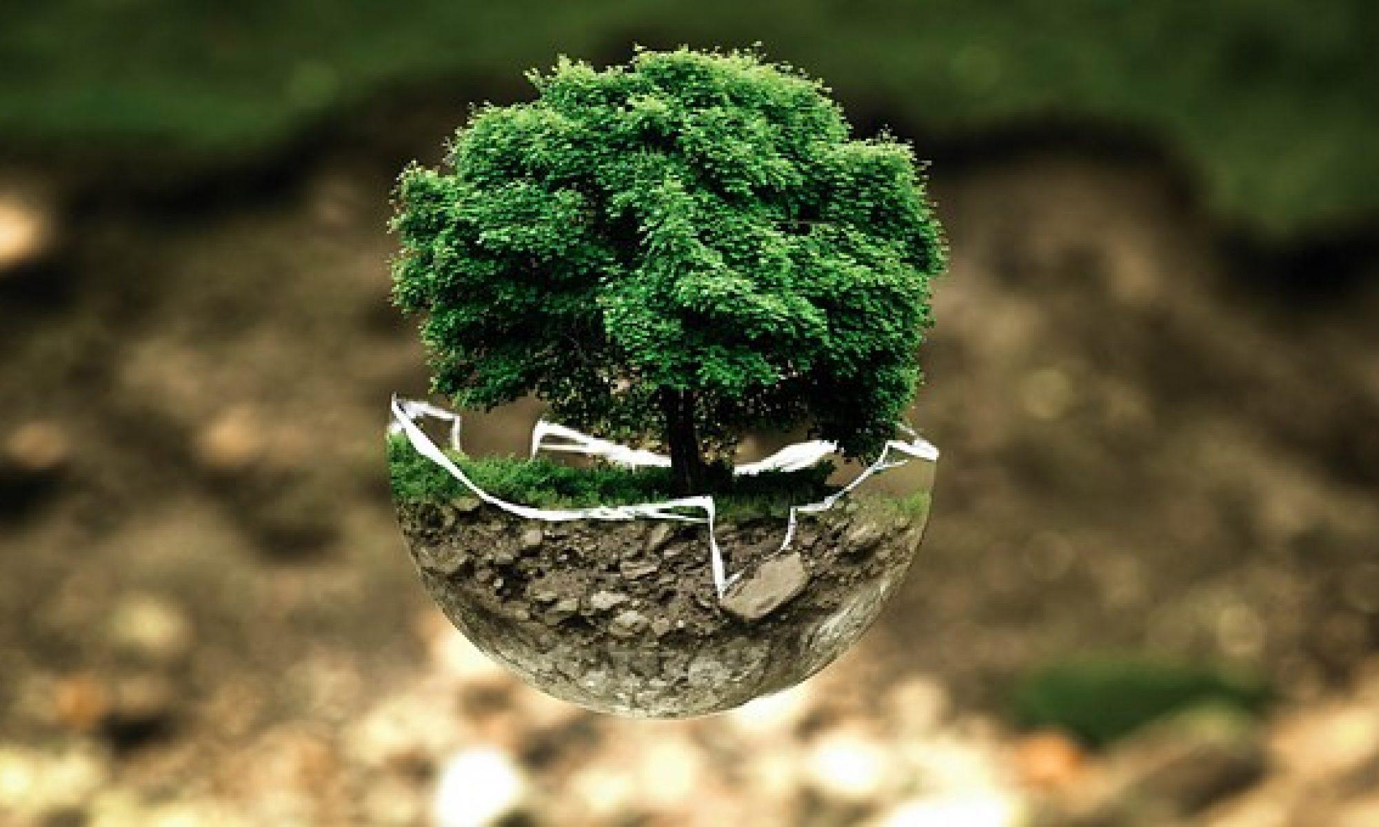 Acera Environmental